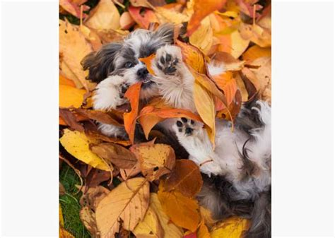 fall puppies pictures of puppies enjoying fall photo gallery