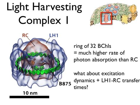 Light Harvesting Complex by Towards Cell Scale Molecular Dyamics K Schulten July 2012