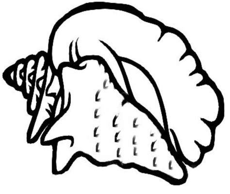queen conch coloring page how to you draw a conch shell clipart best