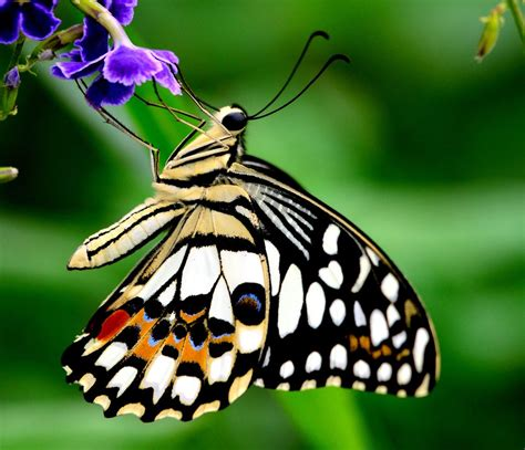 how many years does a live how do butterflies live lifestyle9