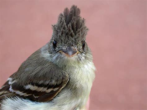 imagenes de animales endemicos animales endemicos taringa