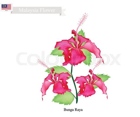 Kl Korean Wrapping Wrapping Bunga national flower of south korea and malaysia flower inspiration