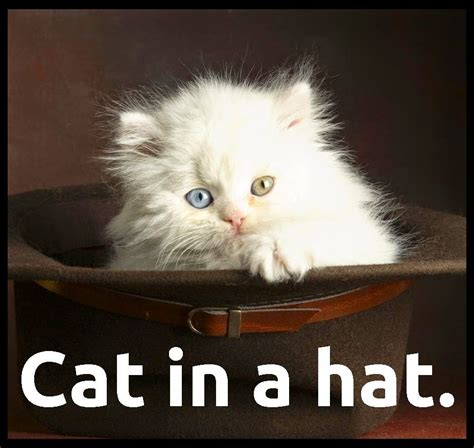 Cat In The Hat Meme - sunday 15 1 2017 hat day the daily kitten
