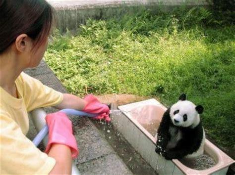 panda bathroom panda bath group picture image by tag keywordpictures com