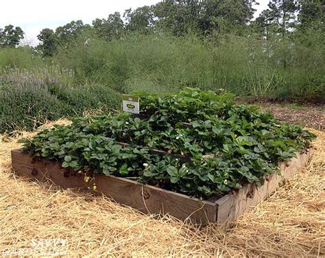 raised strawberry bed 10 inspiring garden ideas from p allen smith s moss mountain farm