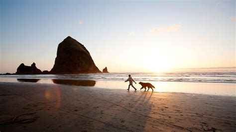 beaches where dogs are allowed best friendly vacations sunset