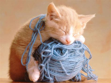 String Cat - kittens images adorable lil kittens hd wallpaper and
