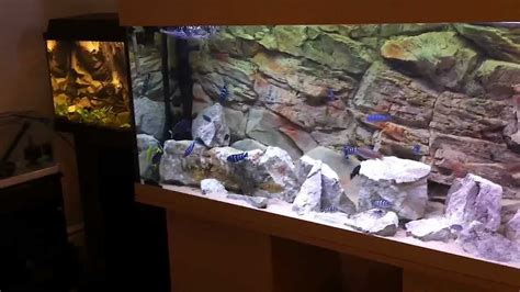 Hd Home Decor my african cichlid tanks a closer look hd youtube