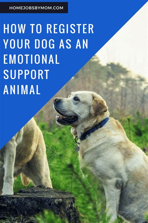 how to register a puppy how to register your as an emotional support animal