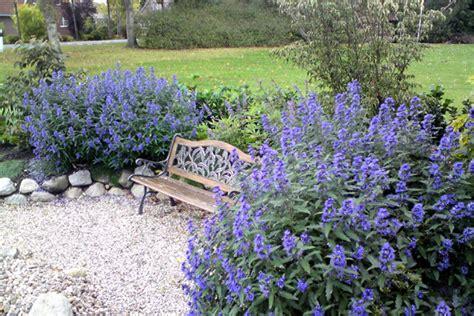 drought resistant flowering shrubs drought resistant plants with color xeriscape
