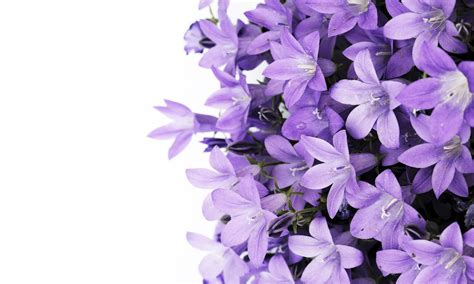 purple flower wallpaper uk purple flowers wall mural photo wallpaper photowall