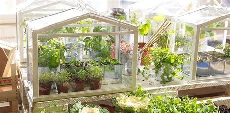 comienza tu huerto urbanoinvernadero  kit de siembra