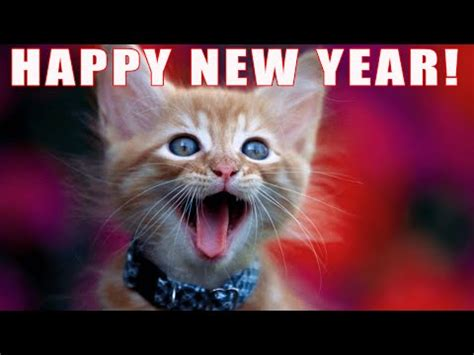 funny happy new year flirt cats sing new years free humor ecards 123 greetings