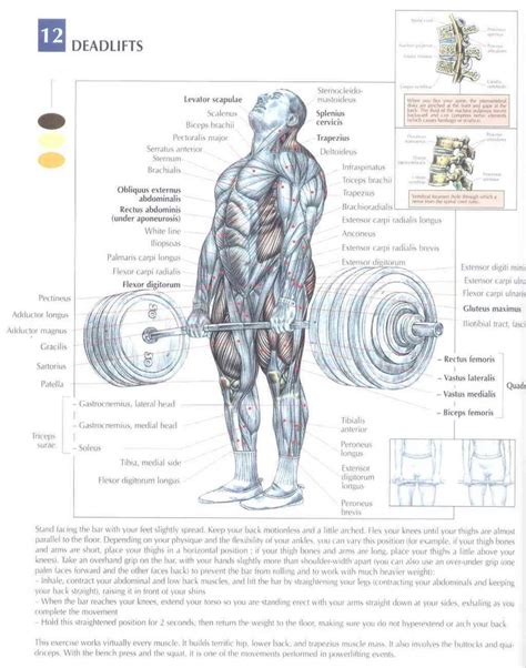 kettlebell swing anatomy 1000 images about workout on pinterest kettlebell