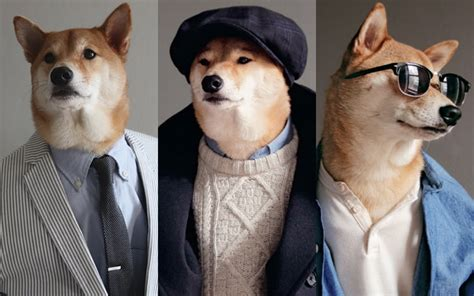 puppies wearing clothes fashion lessons from most stylish in town telegraph