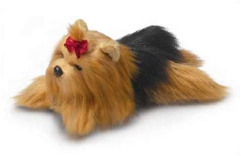 is there such thing as a teacup yorkie how can you find a tea cup yorkie for 200 or show me some yahoo