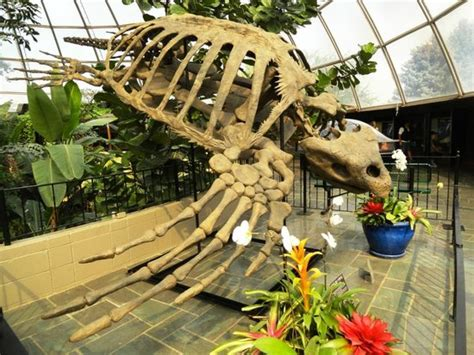 Reptile Gardens Rapid City Sd by Reptile Gardens Rapid City Reviews Of Reptile Gardens
