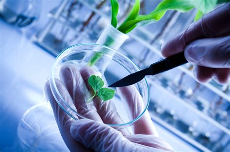 Mba Ms In Biotechnology by Mba Dual Degree Learn About Ms And Mba In Biotechnology
