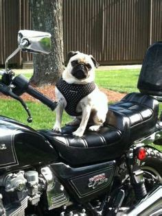 pug motorcycle pug barkenstein on pug pug and pug