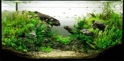 low tech tank the gap 112l about one and half