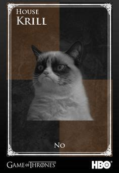 grumpy cat pictures   years eve funny pic