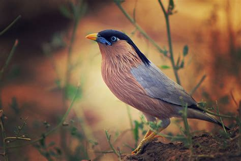 wwwwild bird photocom3gp bird photography tips