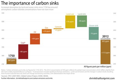 A History Of Carbon Emissions And Sinks