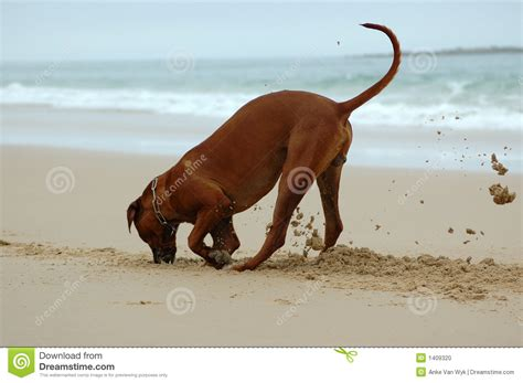puppy digging digging stock photo image 1409320