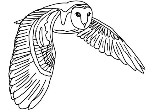 Pictures Of Owls To Color by Printable Owl Coloring Page Gallery Of Owl