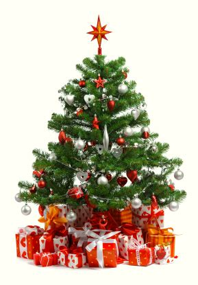 how to prevent christmas tree from drying out tips for selecting a tree