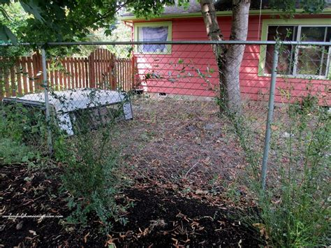 Hometalk   DIY ~ Beautify a Chain Link Fence With Bamboo!