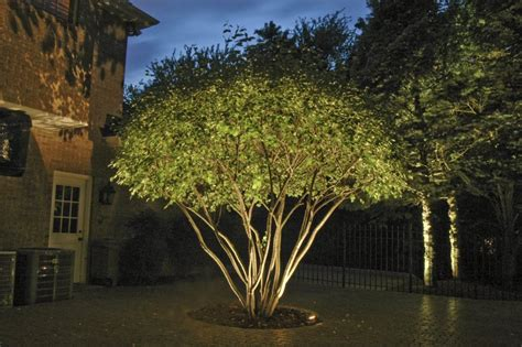 tree uplighting google search yard pinterest