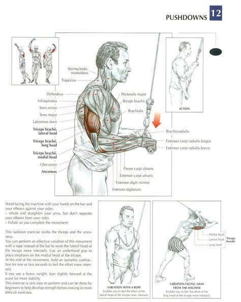 triceps diagram diagrams of neck diagrams free engine image for user