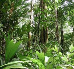 Tropical Rainforest Types Of Plants - what are tropical rainforests definition plants
