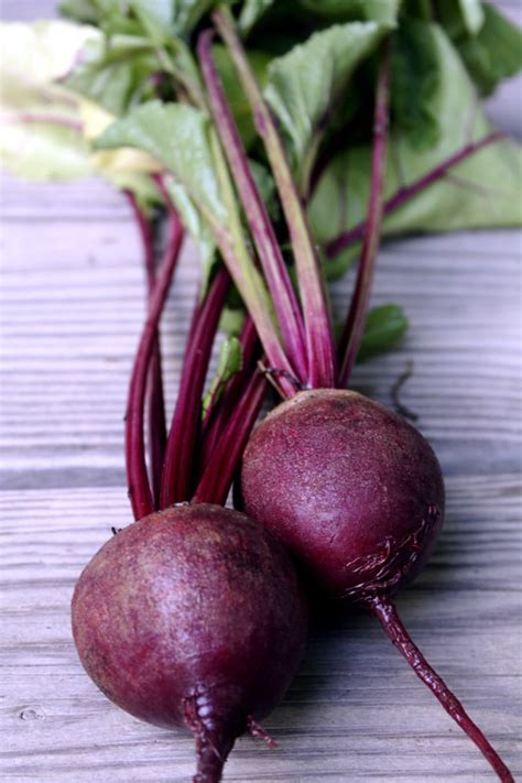 How To Cook Beets From The Garden by How To Grow Beets Growing Beets Garden Beets Beet Plants