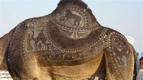 tattoo maker in bikaner unique art on camel at the bikaner camel festival