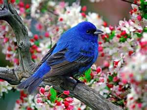 indigo blue bird color inspirations pinterest