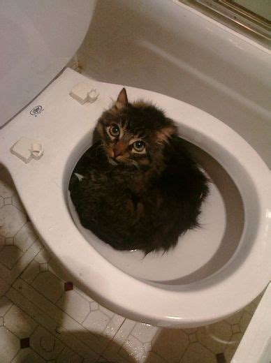 can you train a cat to go outside for bathroom 301 moved permanently