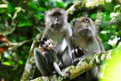 amazing animals     taman negara malaysia