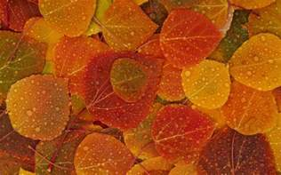 House Cleaning Images fall leaves hd wallpaper 2560x1600 my cleaning lady