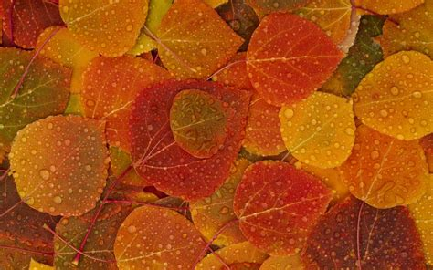 House Cleaning fall leaves hd wallpaper 2560x1600 my cleaning lady