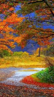 beautiful gorgeous fall color fall