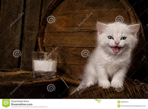 Cat Dreams Of Fish Birds Milk by Cat With Milk Royalty Free Stock Images Image 30830319