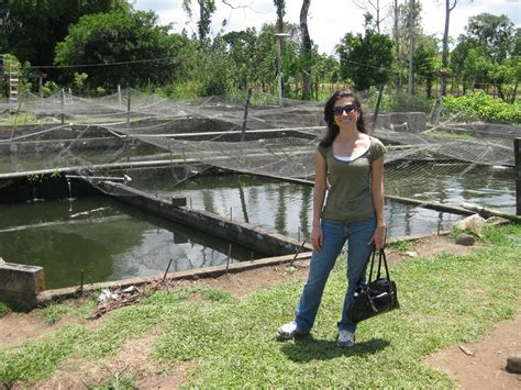 costa rica blogging tilapia farming in costa rica