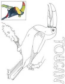 toucan coloring page cloud forest toucan coloring page