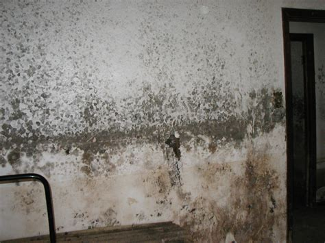 how to get mould off bathroom walls mold 2 2 ohio state waterproofing