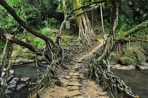 What Is Root Bridge | panoramio photo of living root bridge