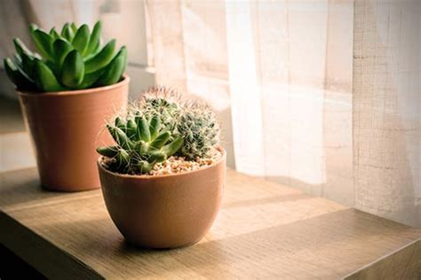 tiny indoor plants beating the january blues our simple mood boosters the