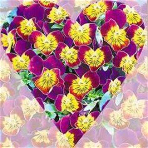 imagenes de flores virtuales postales de flores gratis tarjetas postales de flores