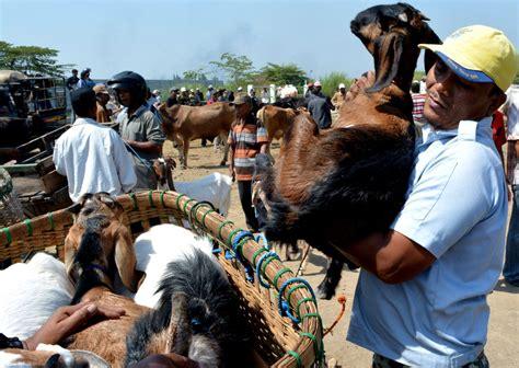 Harga Kambing Jawa Sidoarjo waspadai penipuan berkedok pembelian hewan kurban